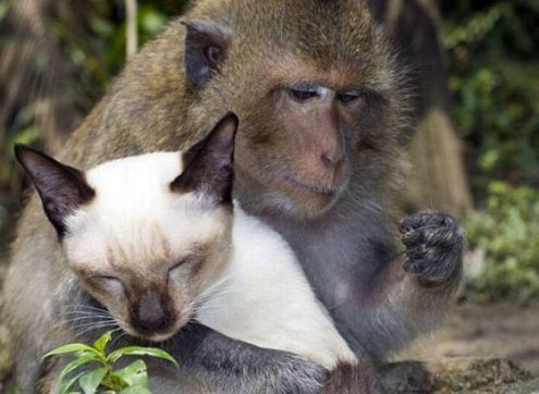 adorable_cat_loving_monkey_13