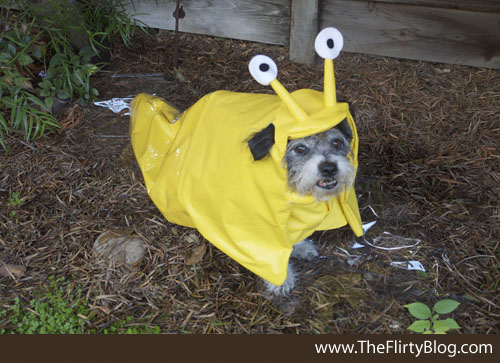 diy-dog-costume-banana-slug